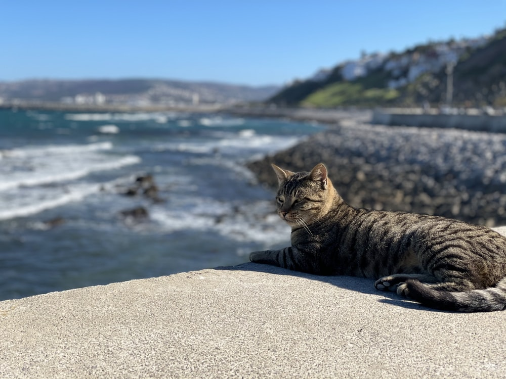 brown tabby cat on gray concrete surface near body of water during daytime