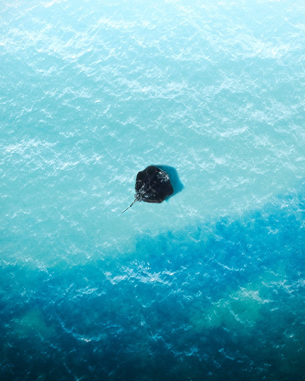 black and blue inflatable ring on blue water