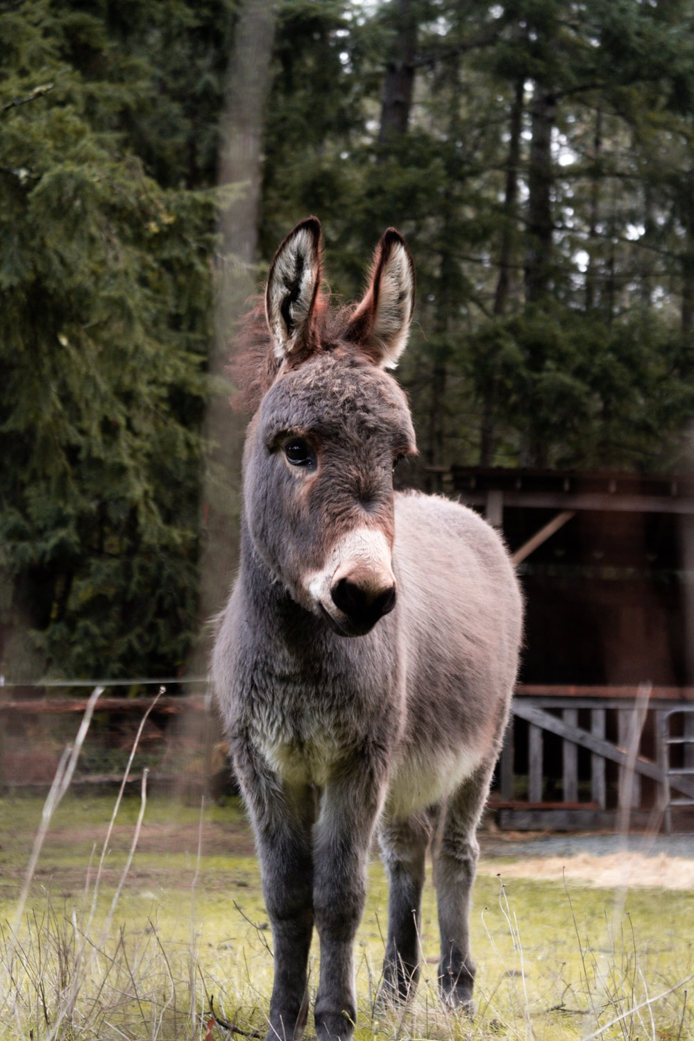 gray donkey on green grass field during daytime