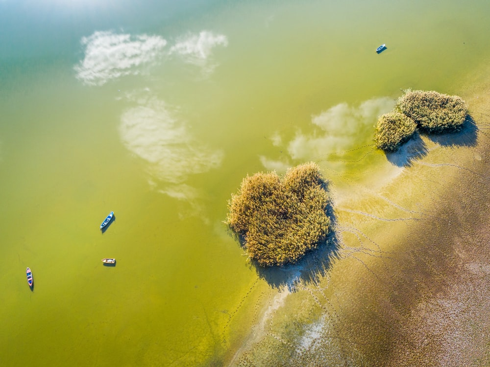 aerial view of green trees on green body of water