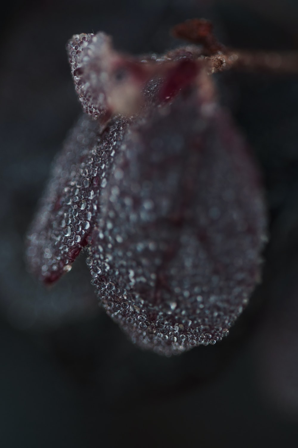 red and white flower bud in close up photography