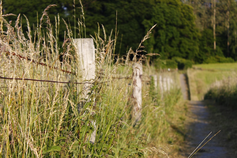 white wooden fence on green grass field