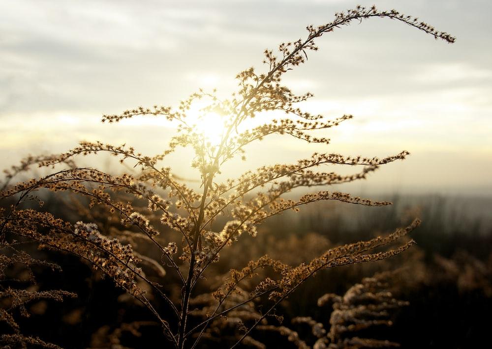 brown grass under white clouds during daytime