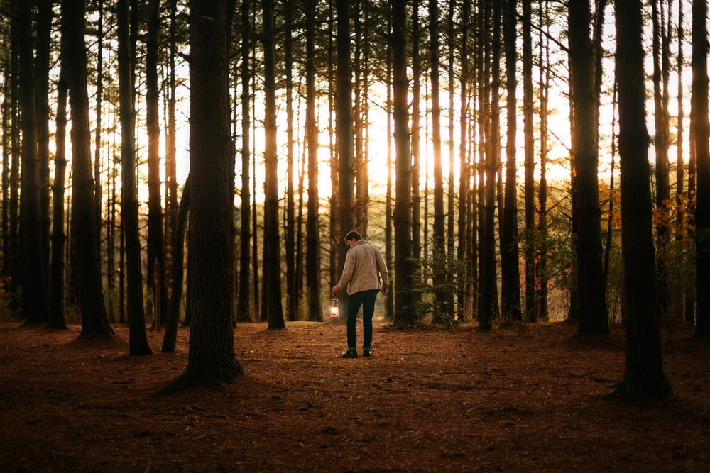 woman in white jacket walking on forest during daytime