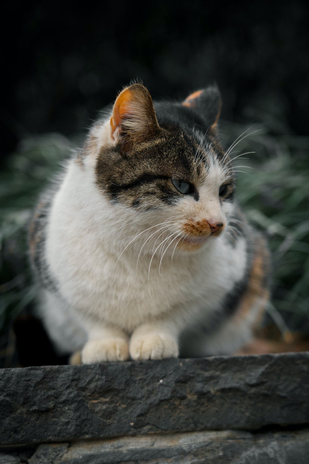 white and brown cat on gray concrete floor