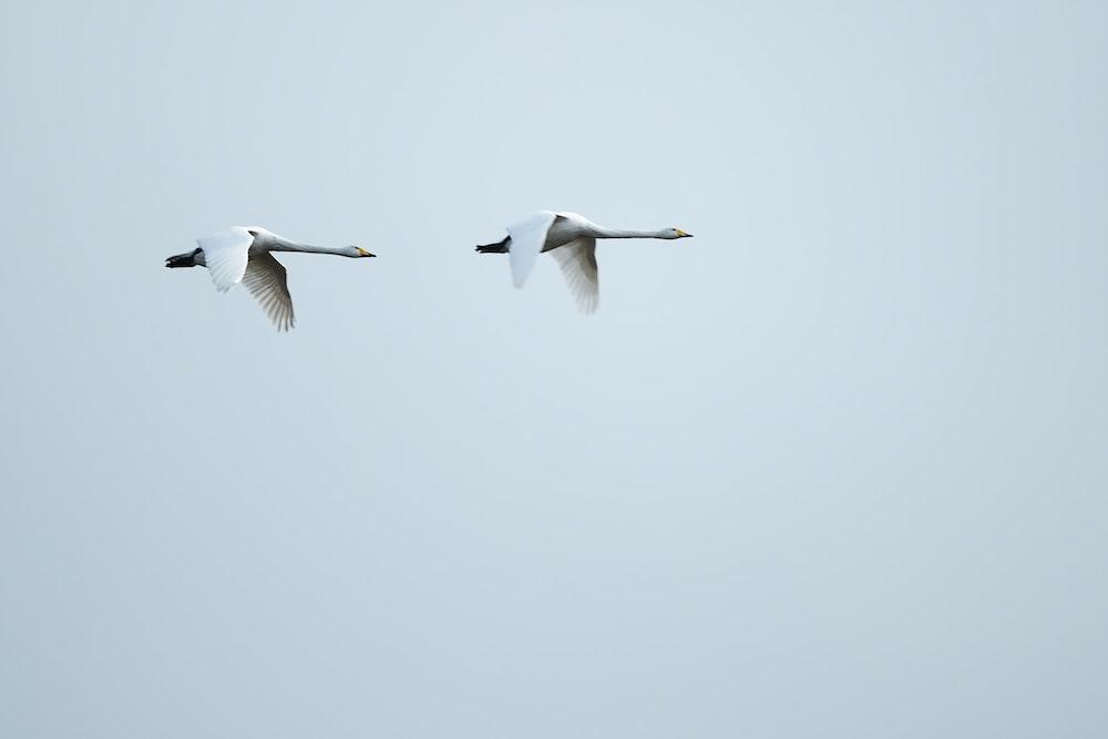 white and black bird flying