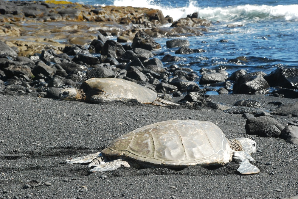 brown turtle on gray rocky shore during daytime
