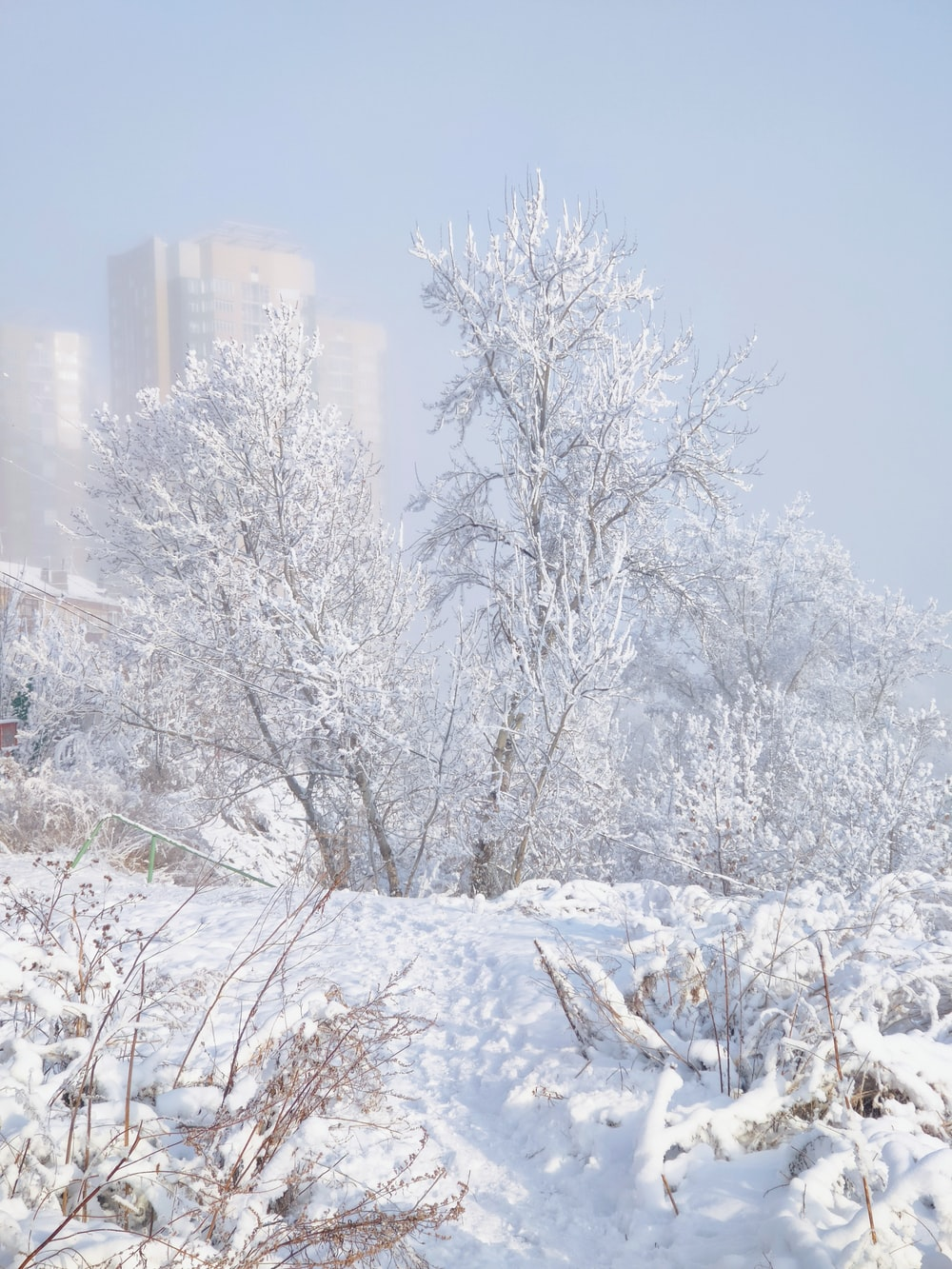 snow covered trees and buildings during daytime