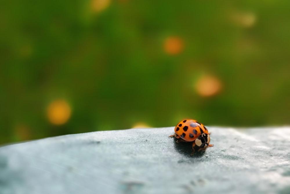 orange and black ladybug on white concrete wall
