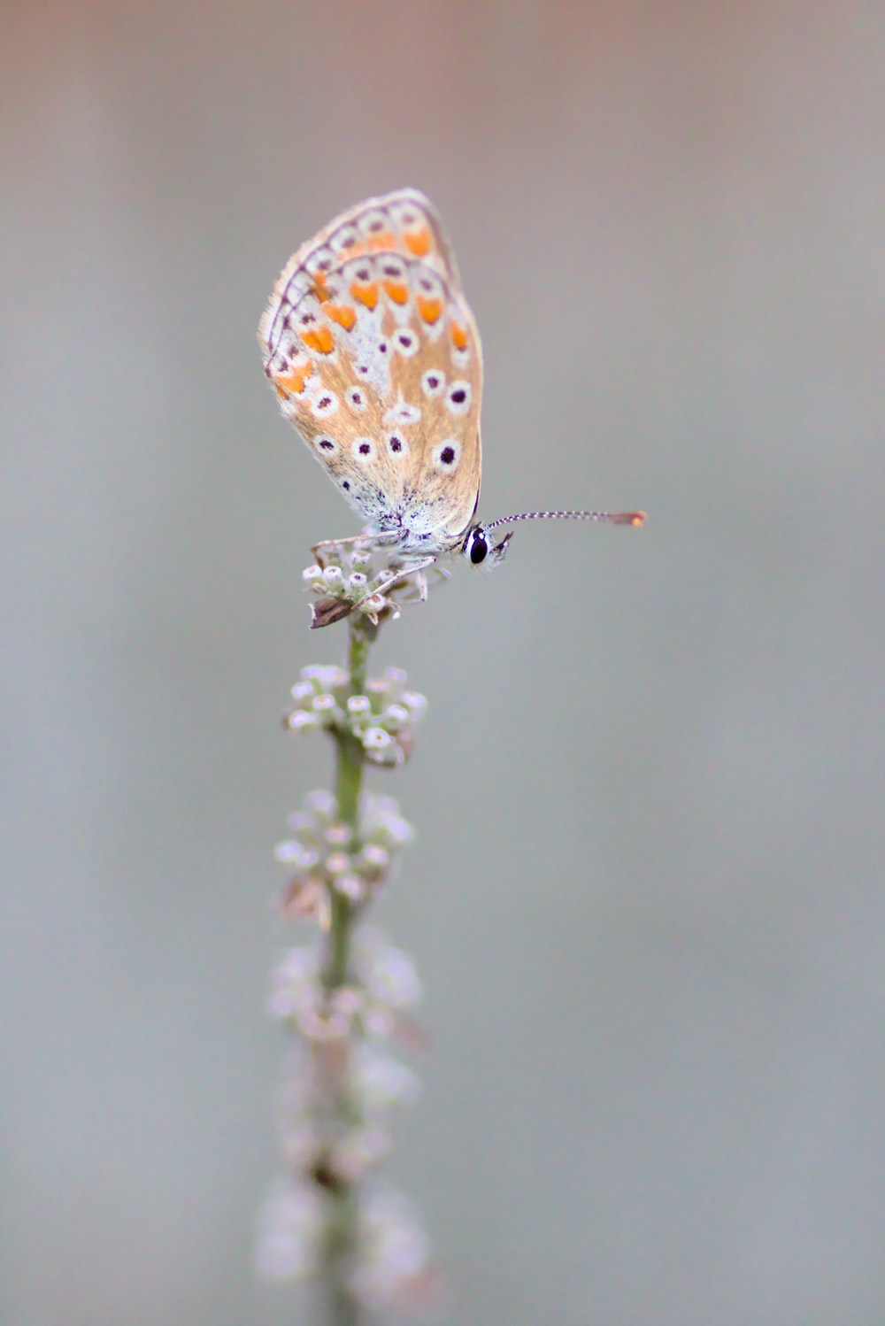 brown and white butterfly perched on white flower in close up photography during daytime