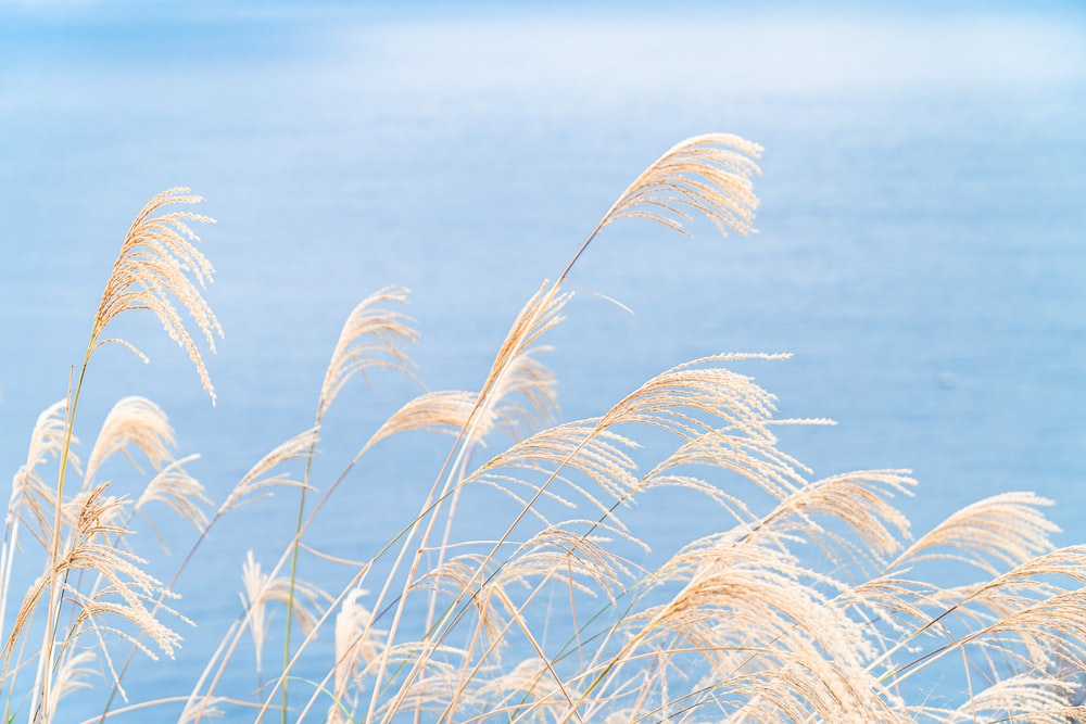 brown grass under blue sky during daytime