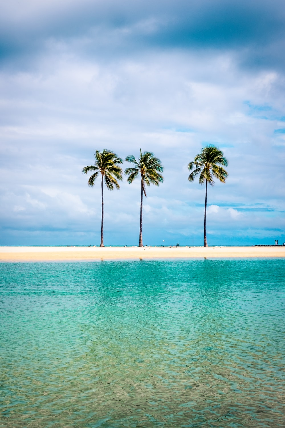 palm trees on beach shore under cloudy sky during daytime