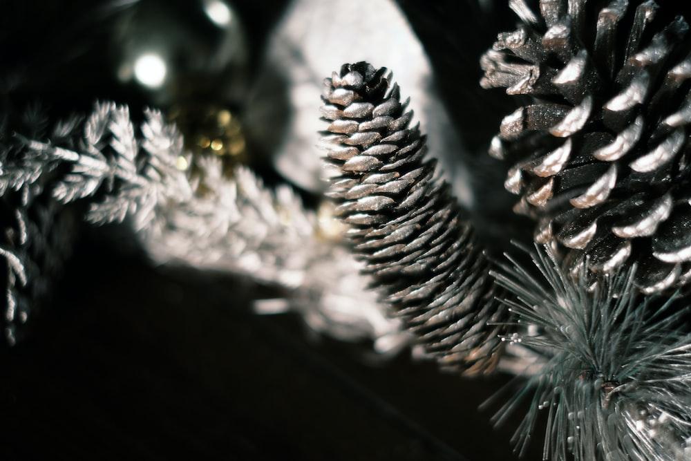 white and silver pine cone