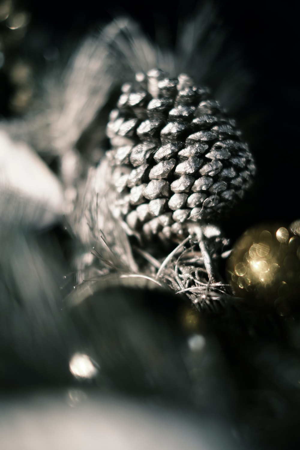 gray pine cone in grayscale photography