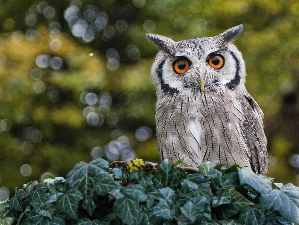 owl on green plant during daytime