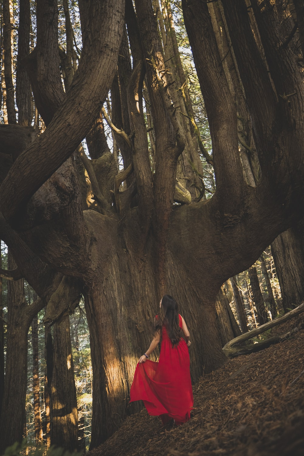 woman in red dress standing near brown tree