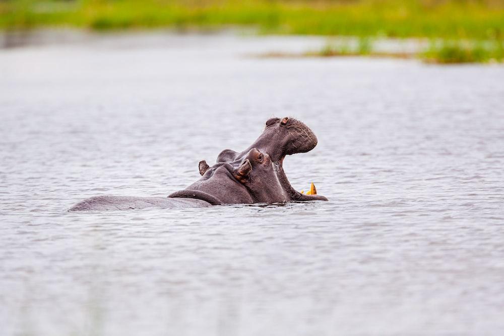 brown animal on water during daytime
