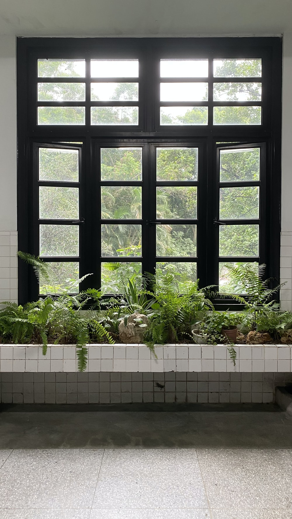 green plants on white ceramic pot beside black wooden window
