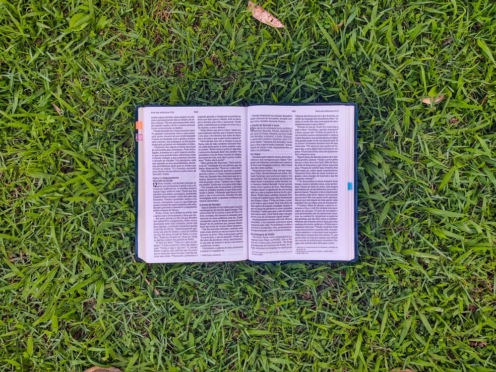 white book on green grass