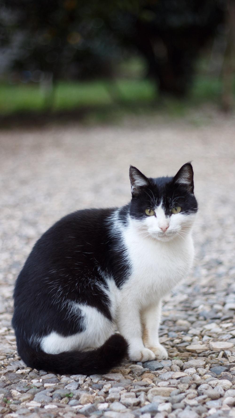 black and white cat on ground