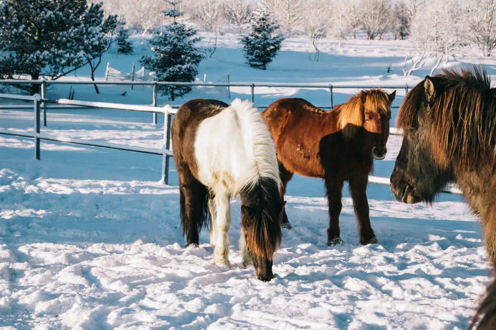 brown and white horse on snow covered ground during daytime