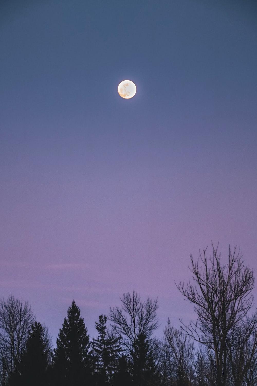 full moon over bare trees