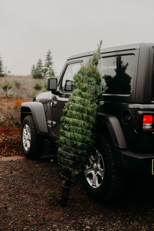 green plant on black jeep wrangler
