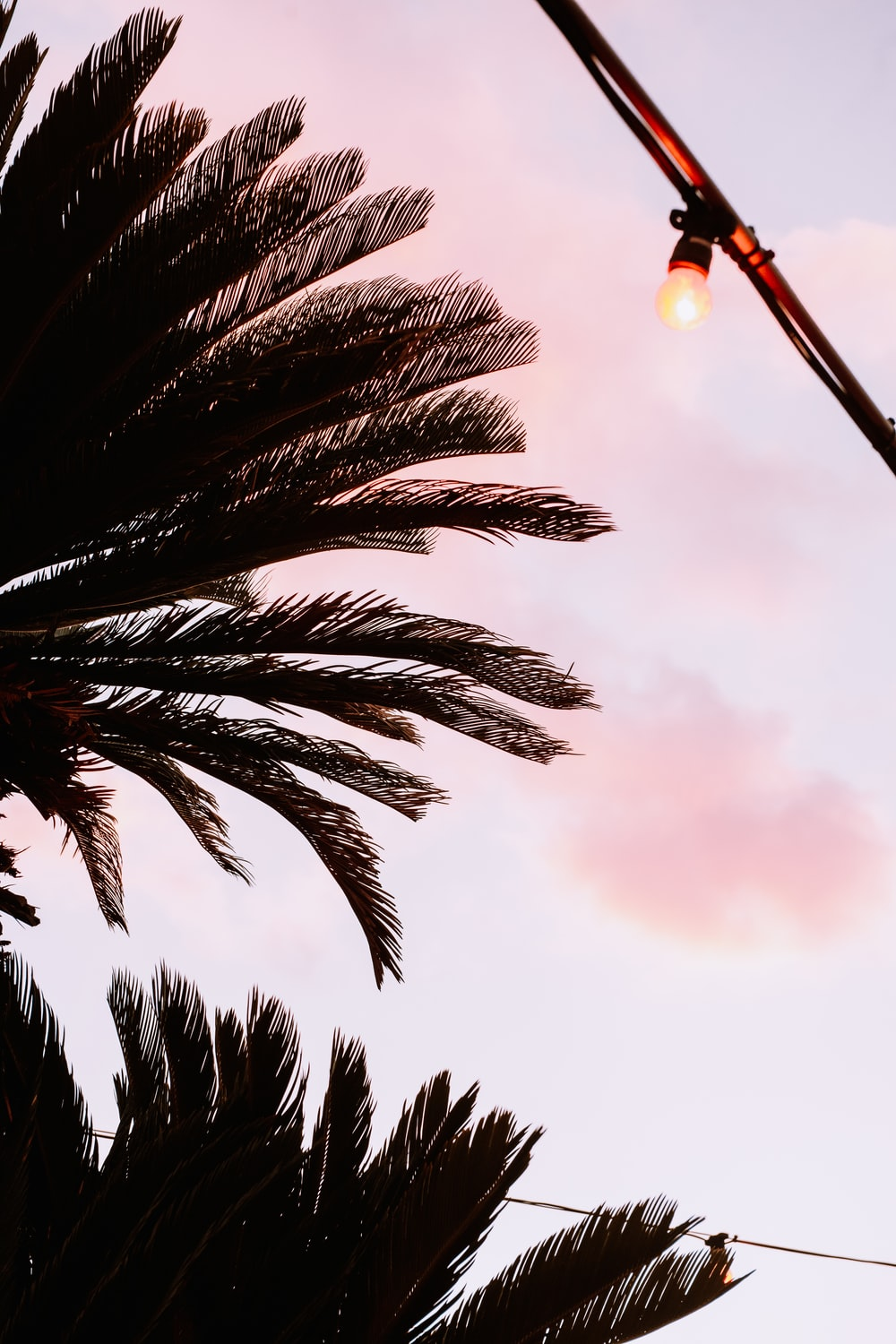 green palm tree under cloudy sky during daytime