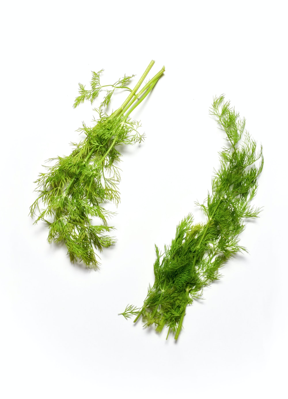 green plant on white background