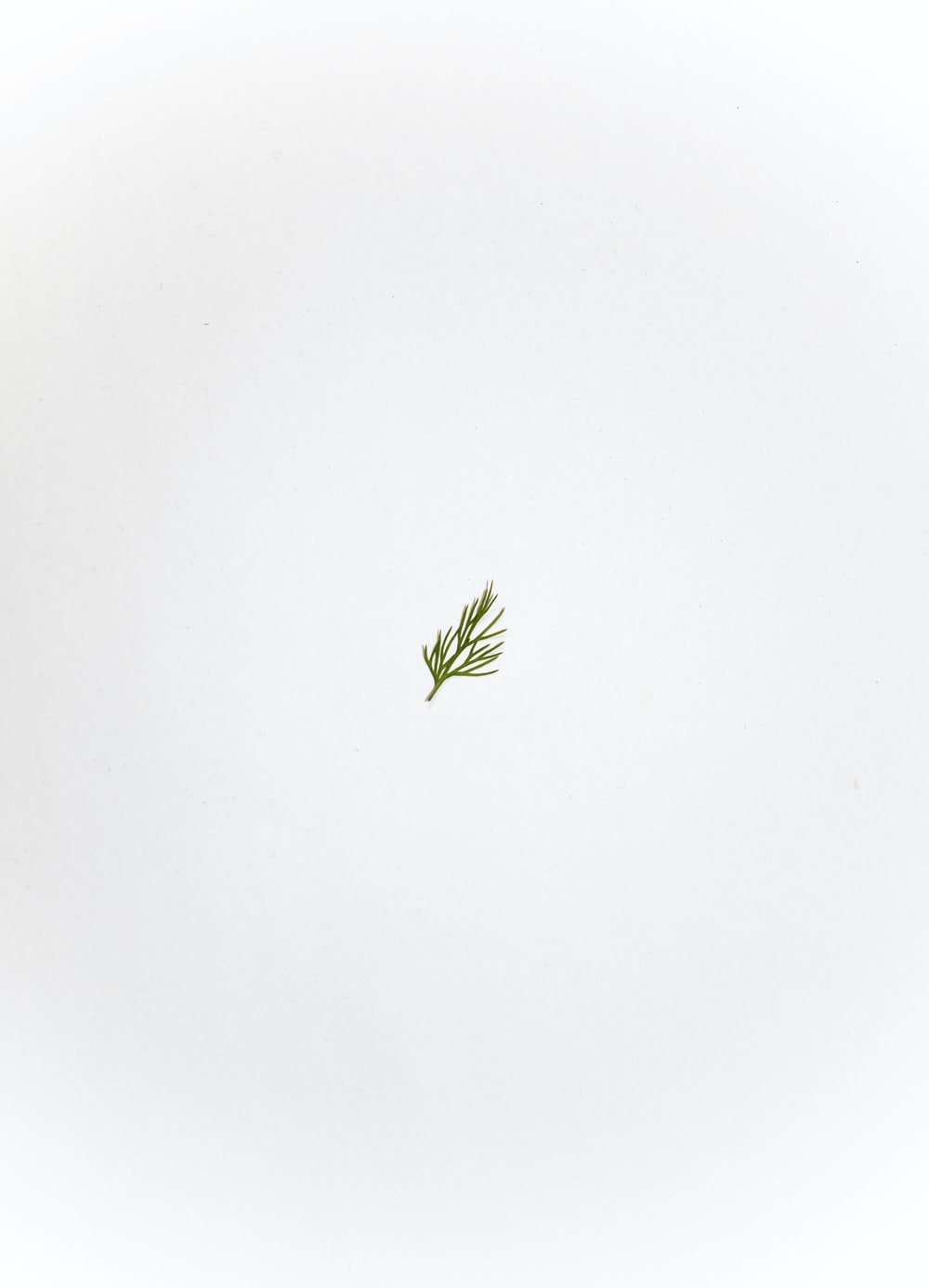 green leaf on white ceramic plate