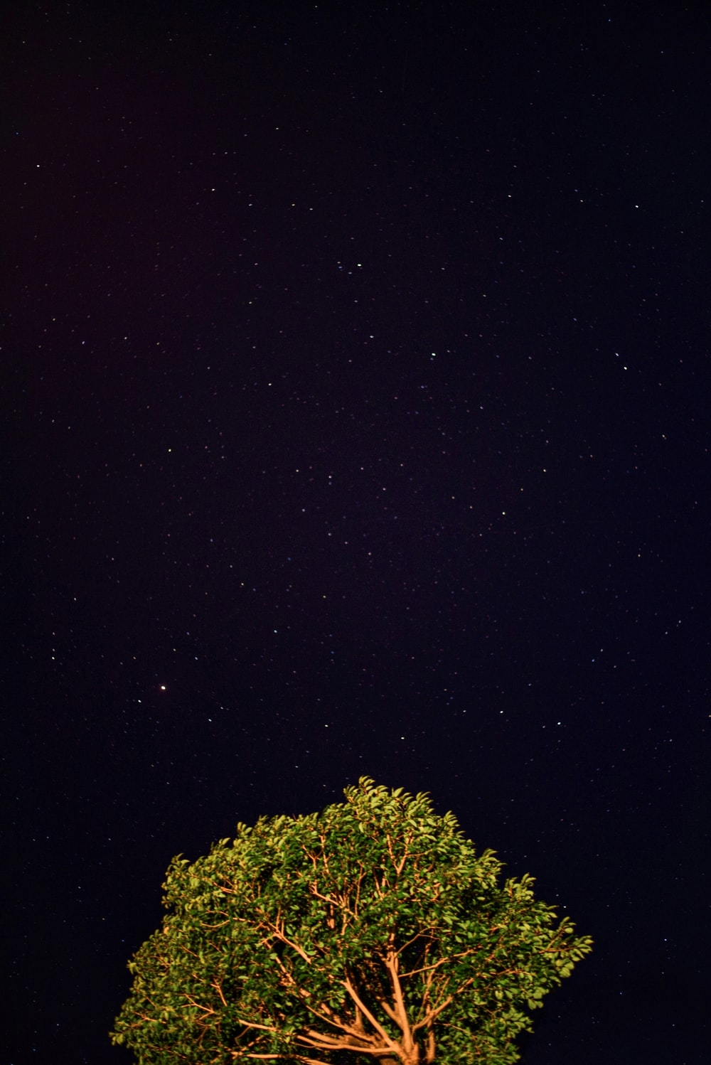 green tree under black sky during night time