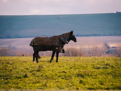 Swindon brown horse on green grass field during daytime