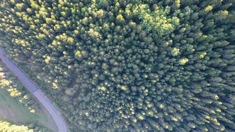 green trees on gray soil