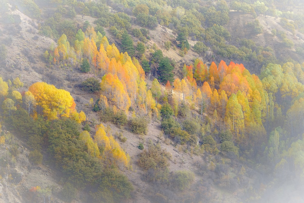 green and yellow trees on mountain