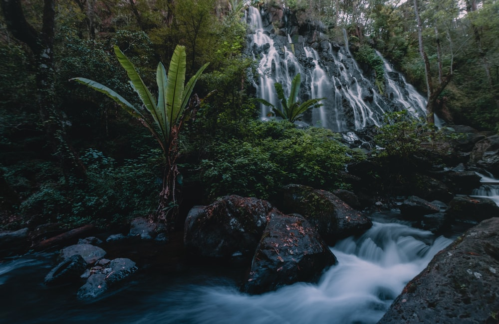 waterfalls in the middle of the forest