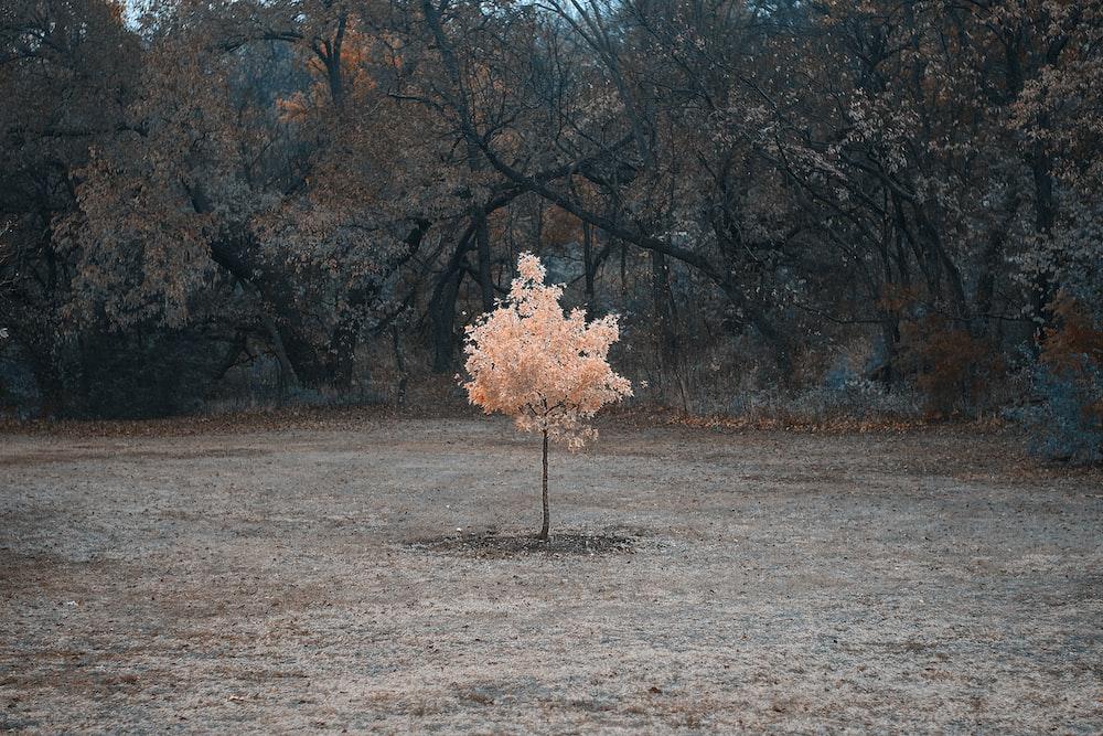 brown tree on brown field