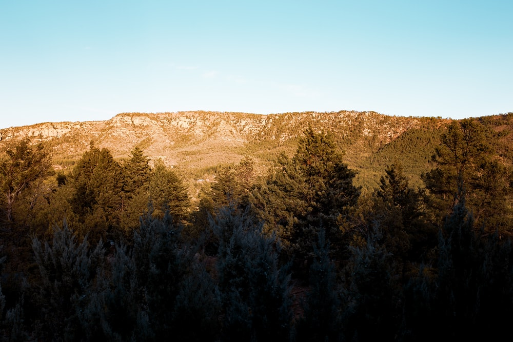 green trees on brown mountain under blue sky during daytime