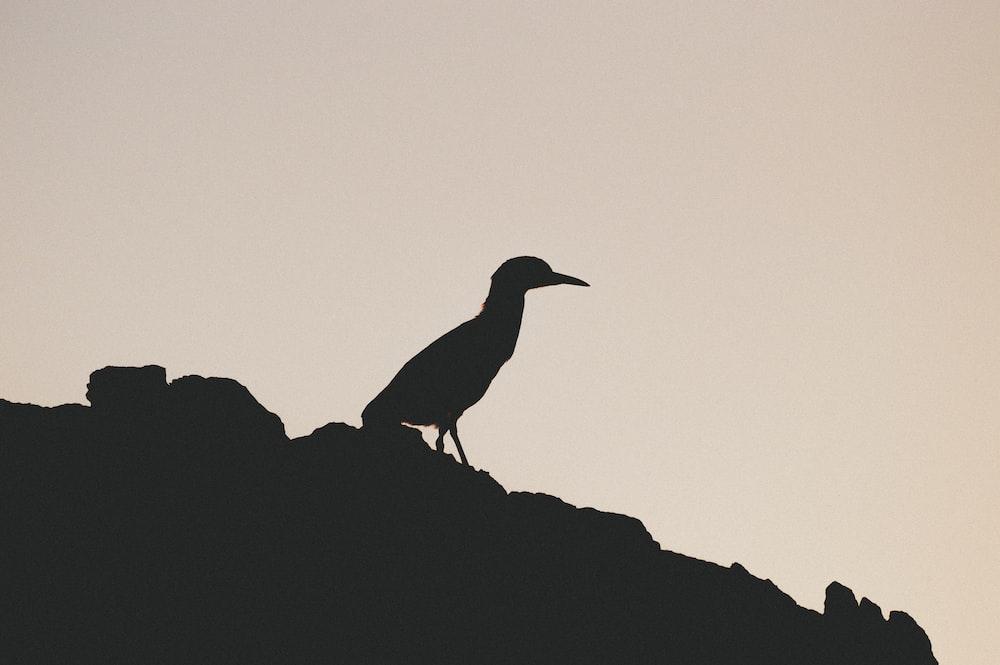 black bird on gray rock during daytime