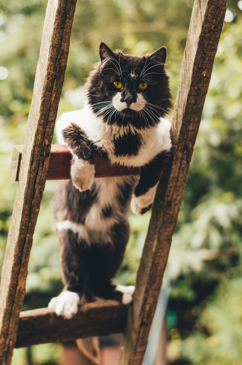 black and white cat on brown wooden fence during daytime