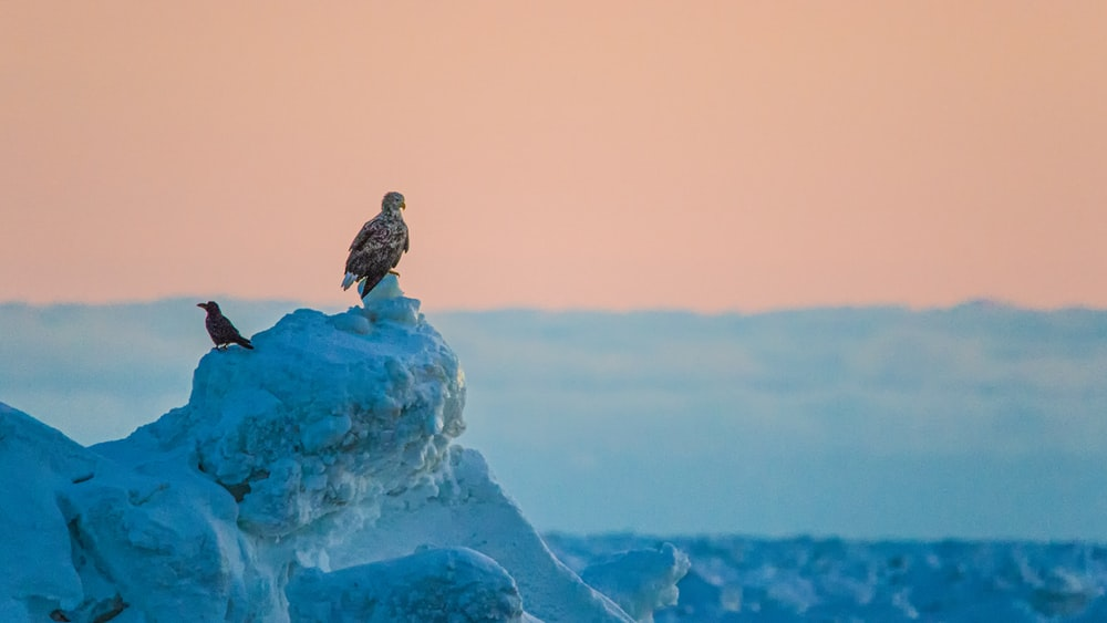 brown bird on ice covered rock
