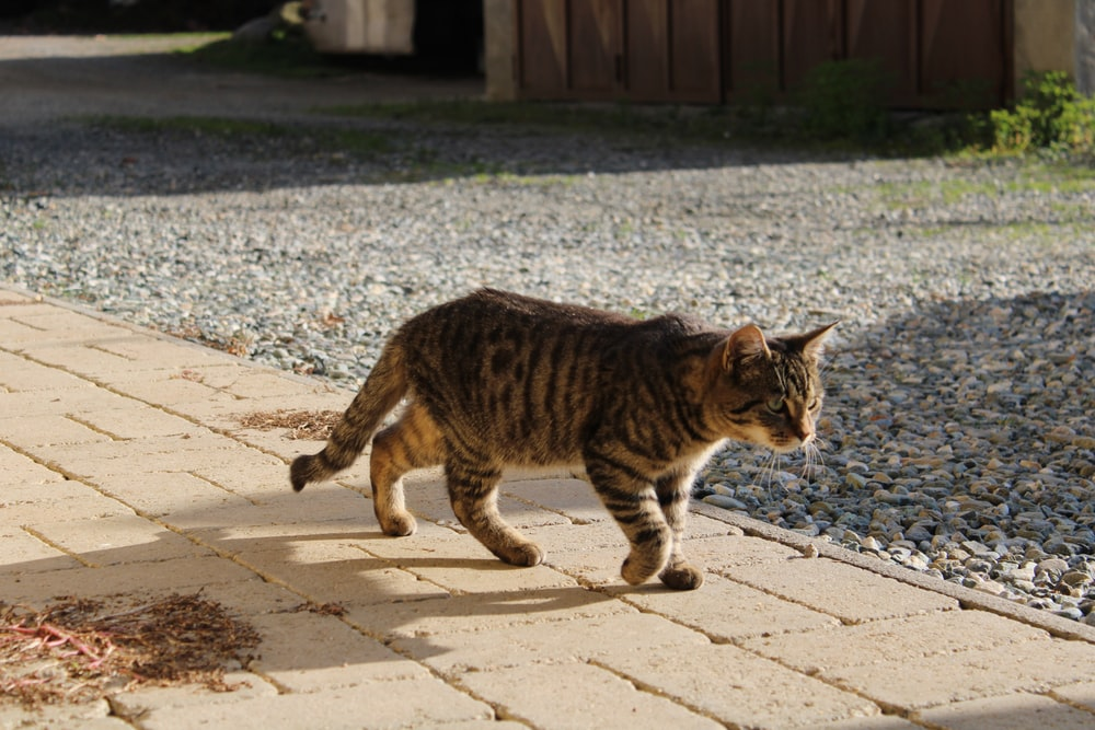 brown tabby cat walking on gray concrete floor during daytime