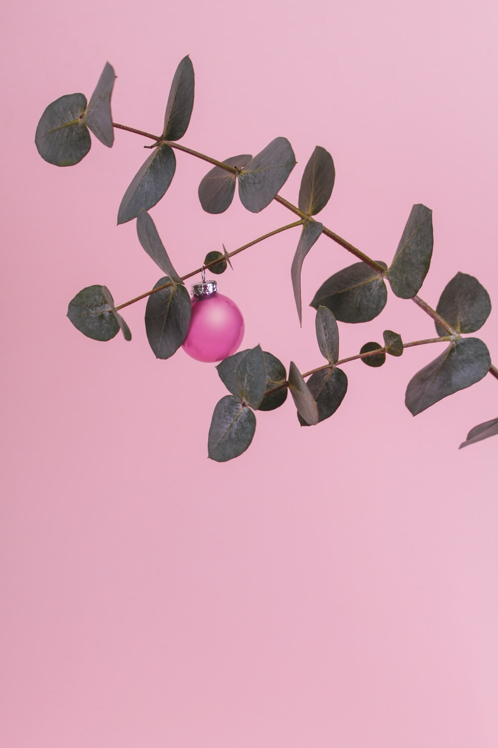 pink and green leaves on white background