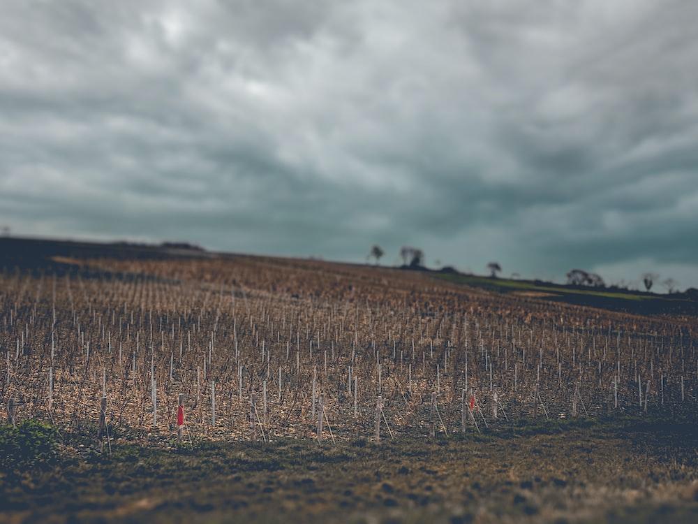 brown grass field under gray clouds