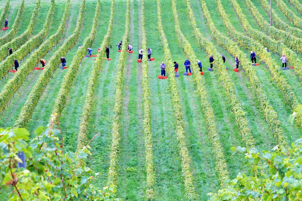people on green grass field during daytime