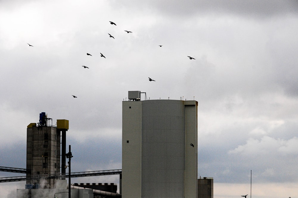 flock of birds flying over white concrete building during daytime
