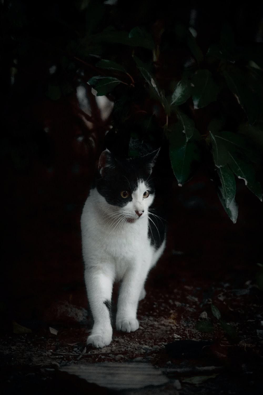 white cat on brown soil