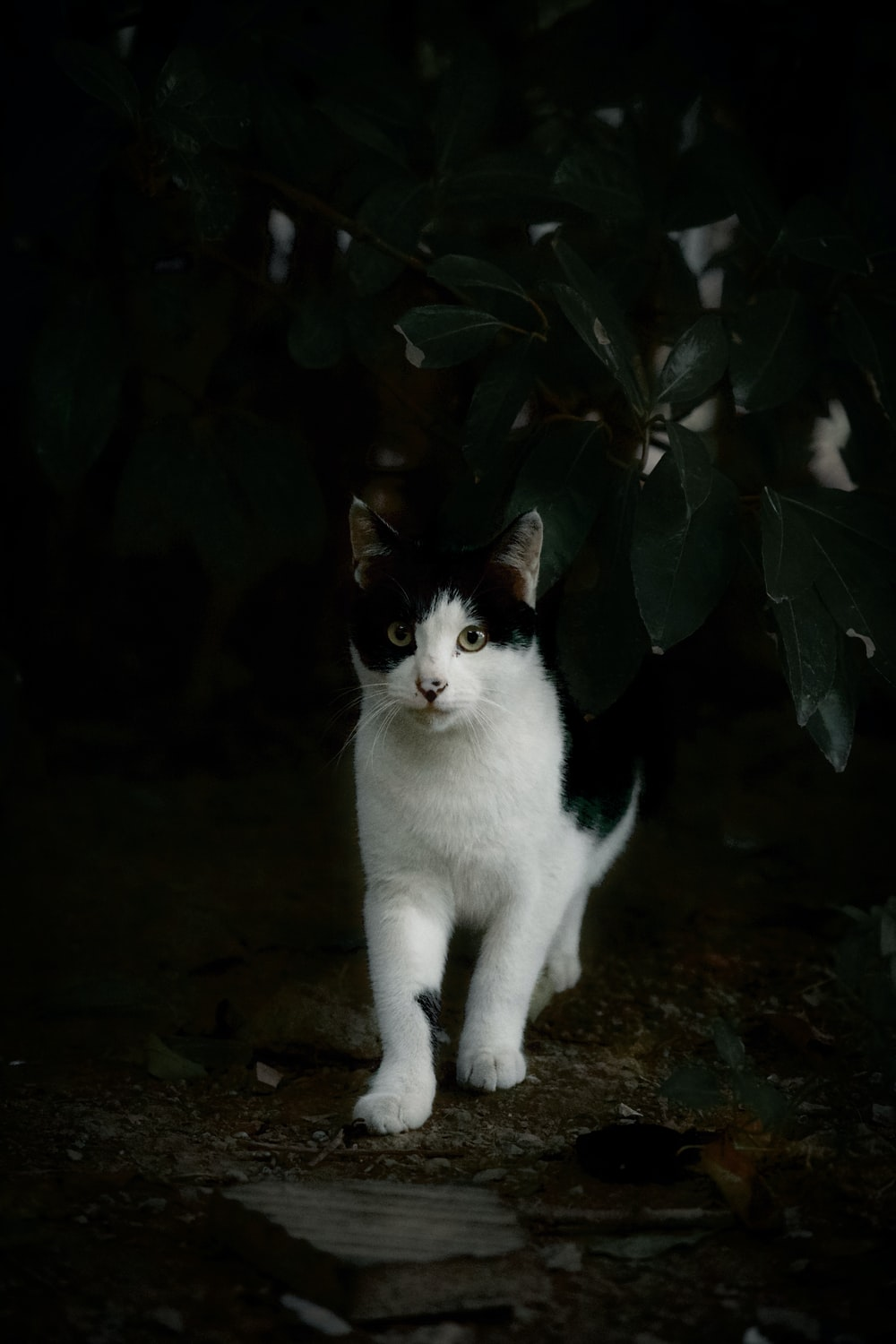 white and black cat on brown soil