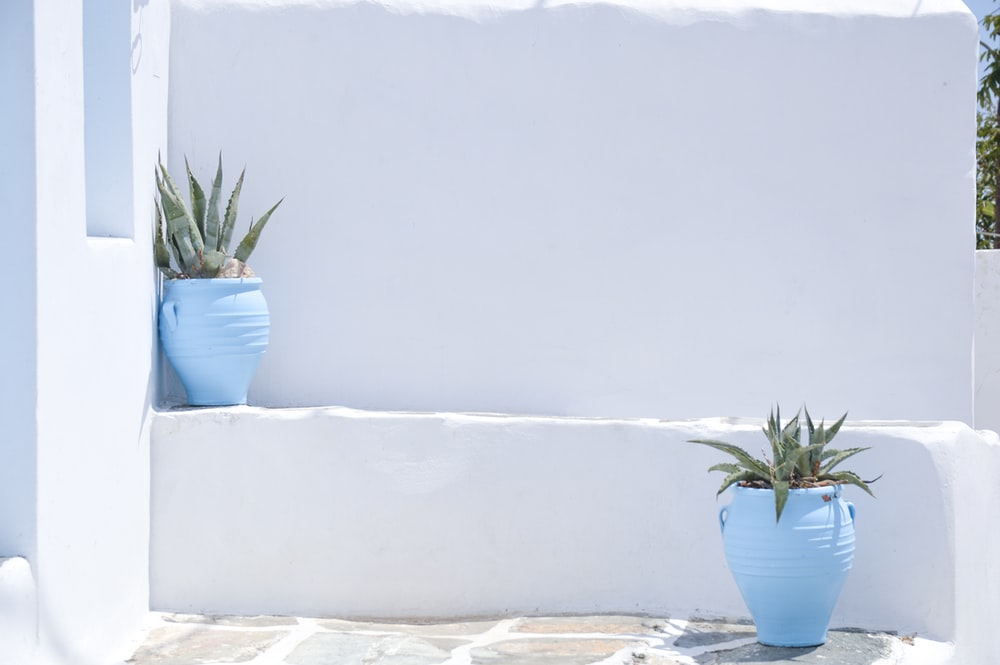 green potted plant on white concrete wall
