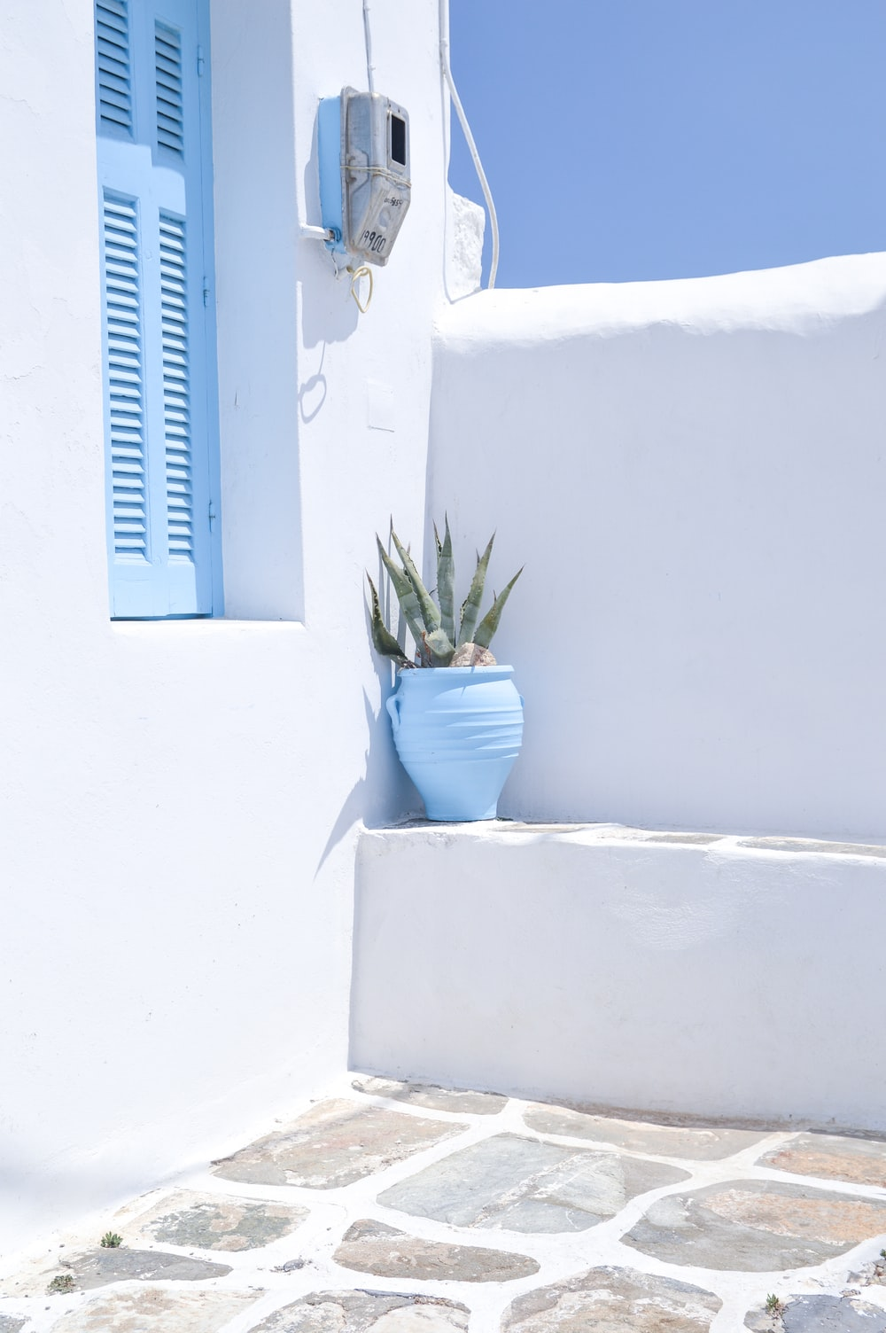 green potted plant on blue wooden window
