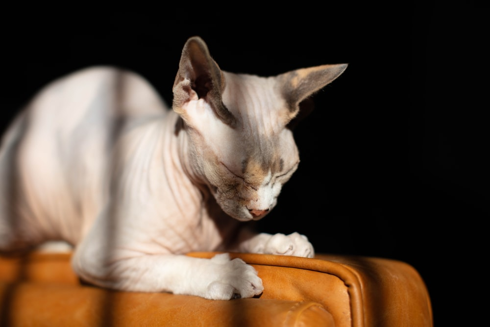 white cat lying on brown leather textile